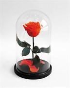 Роза в колбе Mini CORAL (коралловая)
