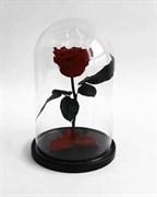 Роза в колбе Mini BURGUNDY (бордовая)