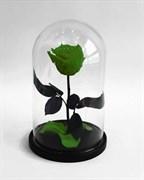 Роза в колбе Mini GREEN (зеленая)