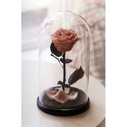 Роза в колбе Mini CAPPUCCINO (капучино)