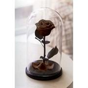 Роза в колбе Mini COFFEE (кофейная)