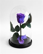 Роза в колбе Mini LILA (лиловая)