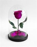 Роза в колбе Mini VIOLET (фиолетовая)