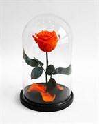 Роза в колбе Mini ORANGE (оранжевая)