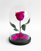 Роза в колбе Mini PINK (фуксия)