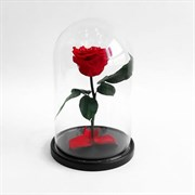 Роза в колбе Mini RED (красная)