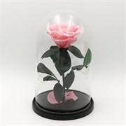 Роза в колбе Premium LIGHT PINK (розовая)