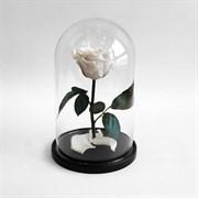 Роза в колбе Mini WHITE (белая)