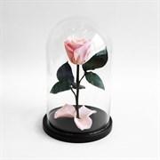 Роза в колбе Mini LIGHT PINK (розовая)