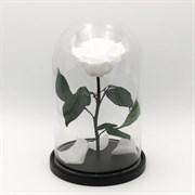 Роза в колбе Premium WHITE (белая)