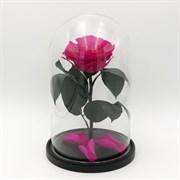 Роза в колбе Premium PINK (фуксия)