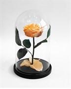 Роза в колбе Premium PEACH (персиковая)