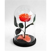 Роза в колбе Premium CORAL (коралловая)
