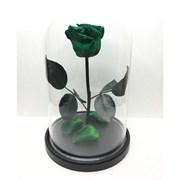 Роза в колбе Premium GREEN (зеленая)