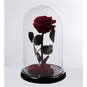 Роза в колбе Premium BURGUNDY (бордовая)