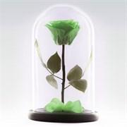 Роза в колбе Premium LIGHT GREEN (светло-зеленая)