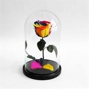 Роза в колбе Premium RAINBOW (радужная)