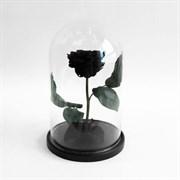 Роза в колбе Premium BLACK (черная)