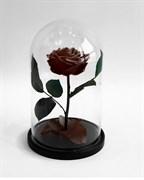 Роза в колбе Premium COFFEE (кофейная)