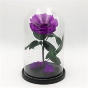 Роза в колбе VIP LILA (лиловая)