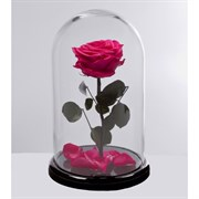 Роза в колбе VIP PINK (фуксия)
