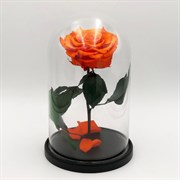 Роза в колбе VIP ORANGE (оранжевая)