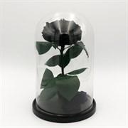 Роза в колбе VIP BLACK (черная)
