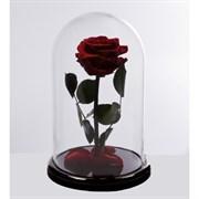Роза в колбе VIP BURGUNDY (бордовая)