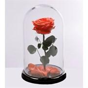 Роза в колбе VIP CORAL (коралловая)
