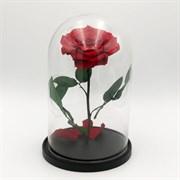 Роза в колбе VIP RED (красная)