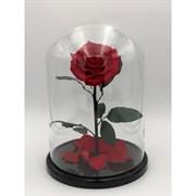 Роза в колбе King Size RED (красная)