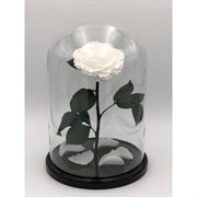 Роза в колбе King Size WHITE (белая)