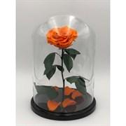 Роза в колбе King Size ORANGE (оранжевая)